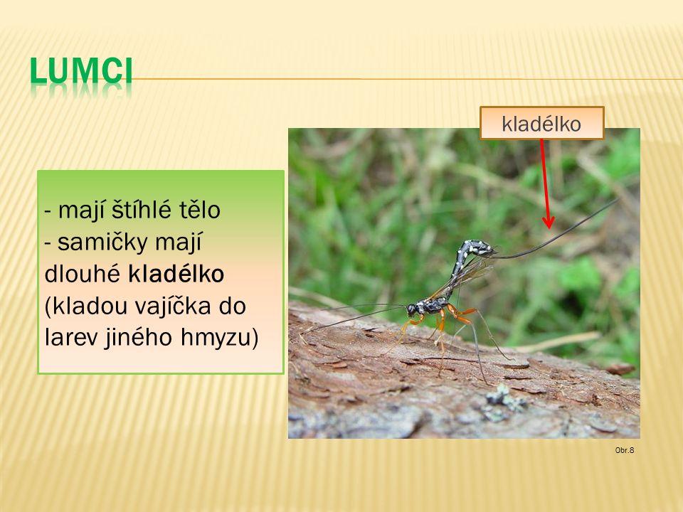 Obr.8 - mají štíhlé tělo - samičky mají dlouhé kladélko (kladou vajíčka do larev jiného hmyzu) kladélko