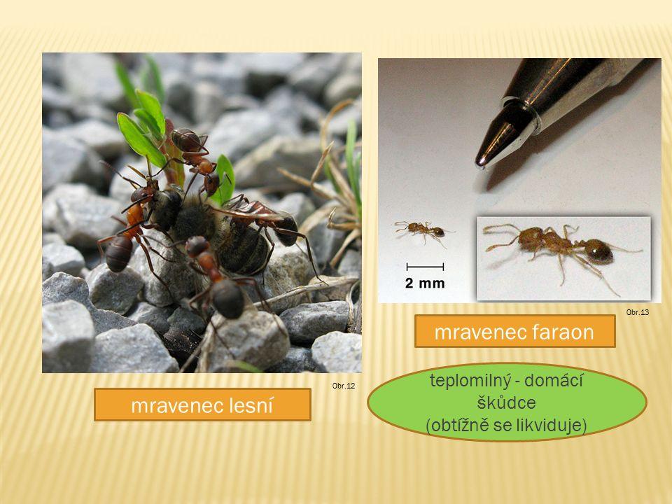 mravenec lesní mravenec faraon Obr.12 Obr.13 teplomilný - domácí škůdce (obtížně se likviduje)