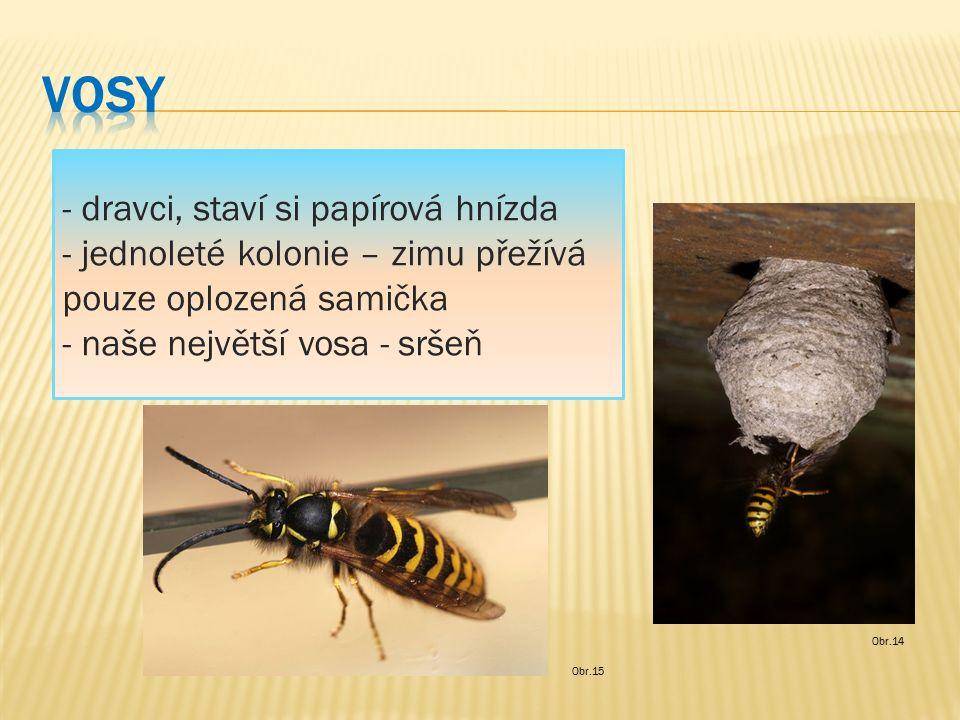 - dravci, staví si papírová hnízda - jednoleté kolonie – zimu přežívá pouze oplozená samička - naše největší vosa - sršeň Obr.14 Obr.15