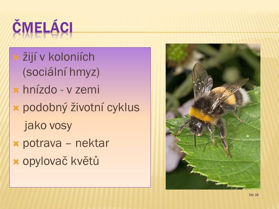  žijí v koloniích (sociální hmyz)  hnízdo - v zemi  podobný životní cyklus jako vosy  potrava – nektar  opylovač květů Obr.16
