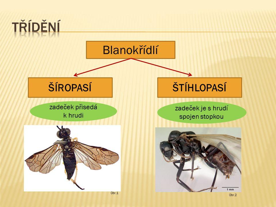 Obr.3 Obr.4 larvy škodí na rostlinách