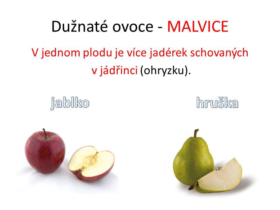 Dužnaté ovoce - PECKOVICE V každém plodu je jedna tvrdá pecka.