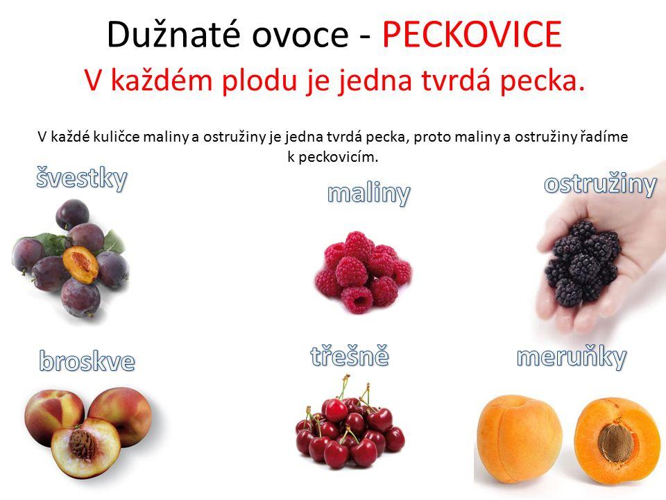 Dužnaté ovoce - PECKOVICE V každém plodu je jedna tvrdá pecka. V každé kuličce maliny a ostružiny je jedna tvrdá pecka, proto maliny a ostružiny řadím