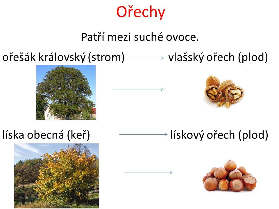 Ořechy Patří mezi suché ovoce. ořešák královský (strom)vlašský ořech (plod) líska obecná (keř)lískový ořech (plod)