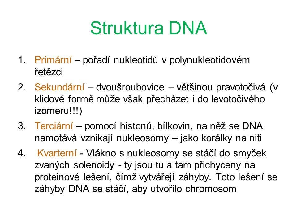 Struktura DNA 1.Primární – pořadí nukleotidů v polynukleotidovém řetězci 2.Sekundární – dvoušroubovice – většinou pravotočivá (v klidové formě může však přecházet i do levotočivého izomeru!!!) 3.Terciární – pomocí histonů, bílkovin, na něž se DNA namotává vznikají nukleosomy – jako korálky na niti 4.
