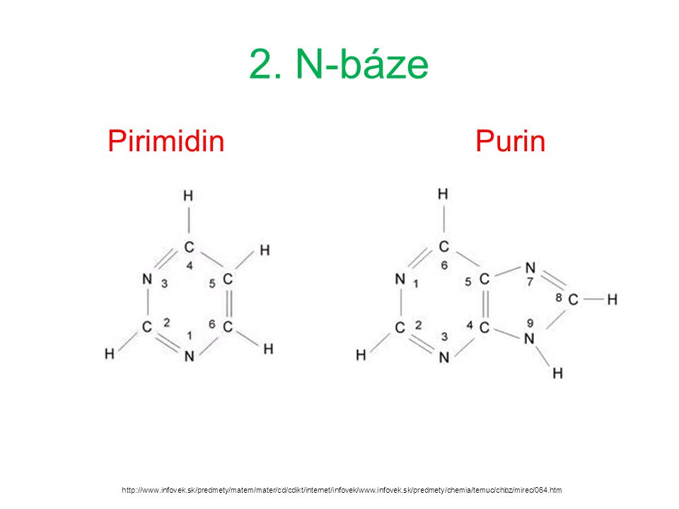 2. N-báze PirimidinPurin http://www.infovek.sk/predmety/matem/mater/cd/cdikt/internet/infovek/www.infovek.sk/predmety/chemia/temuc/chbz/mirec/064.htm