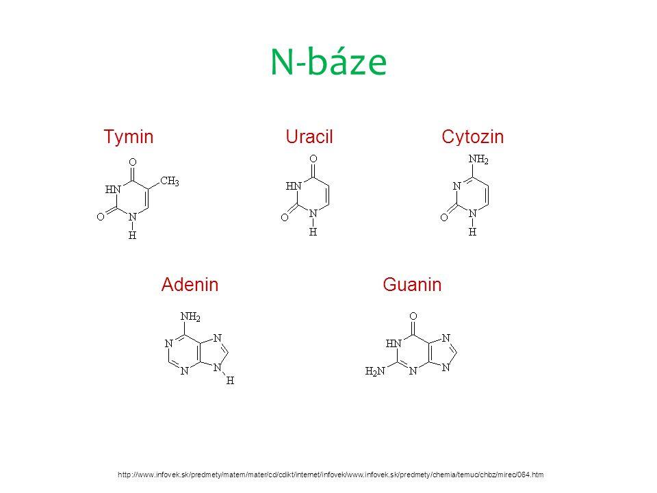 N-báze Tymin Uracil Cytozin Adenin Guanin http://www.infovek.sk/predmety/matem/mater/cd/cdikt/internet/infovek/www.infovek.sk/predmety/chemia/temuc/chbz/mirec/064.htm