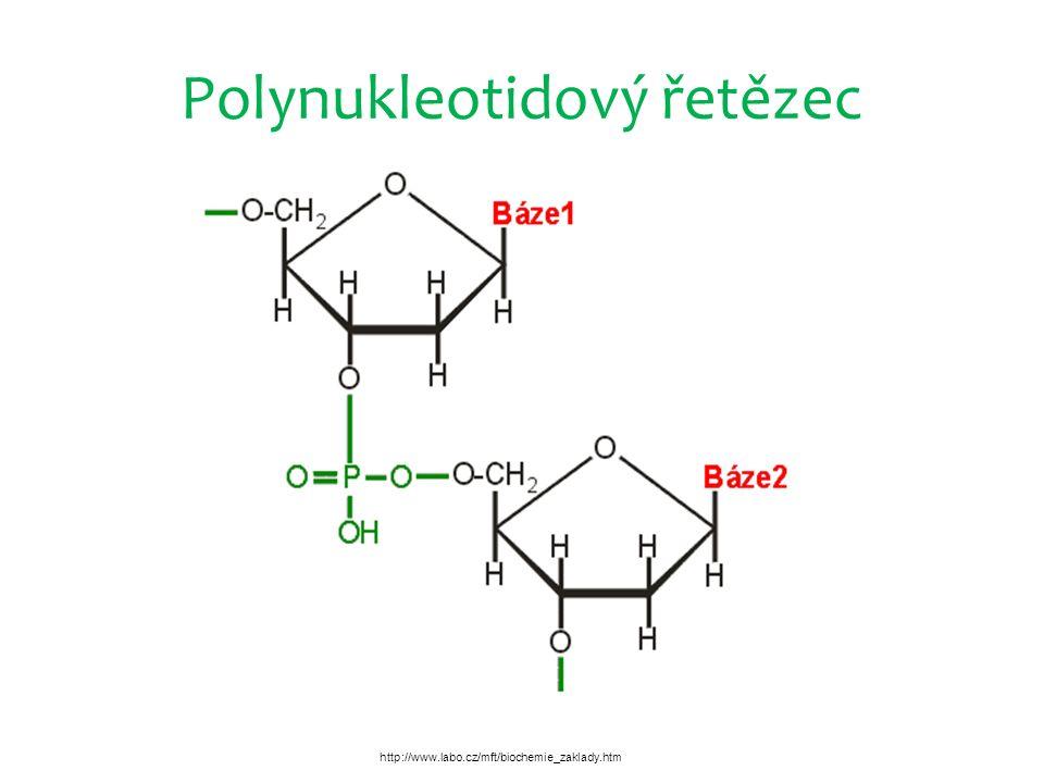 Polynukleotidový řetězec http://www.labo.cz/mft/biochemie_zaklady.htm