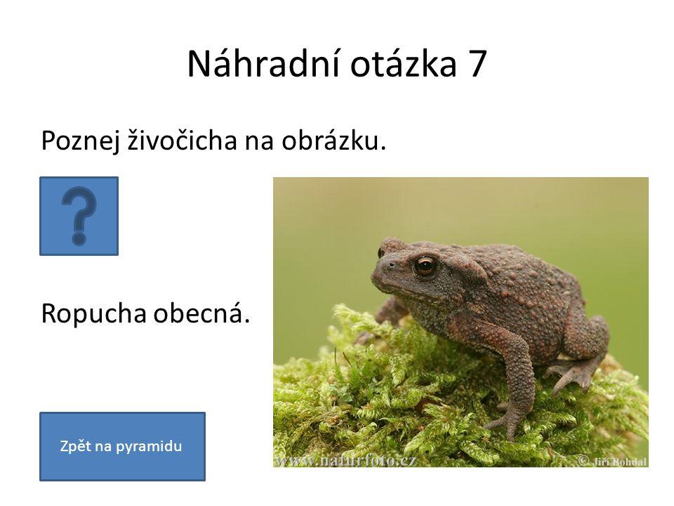 Náhradní otázka 7 Poznej živočicha na obrázku. Ropucha obecná. Zpět na pyramidu