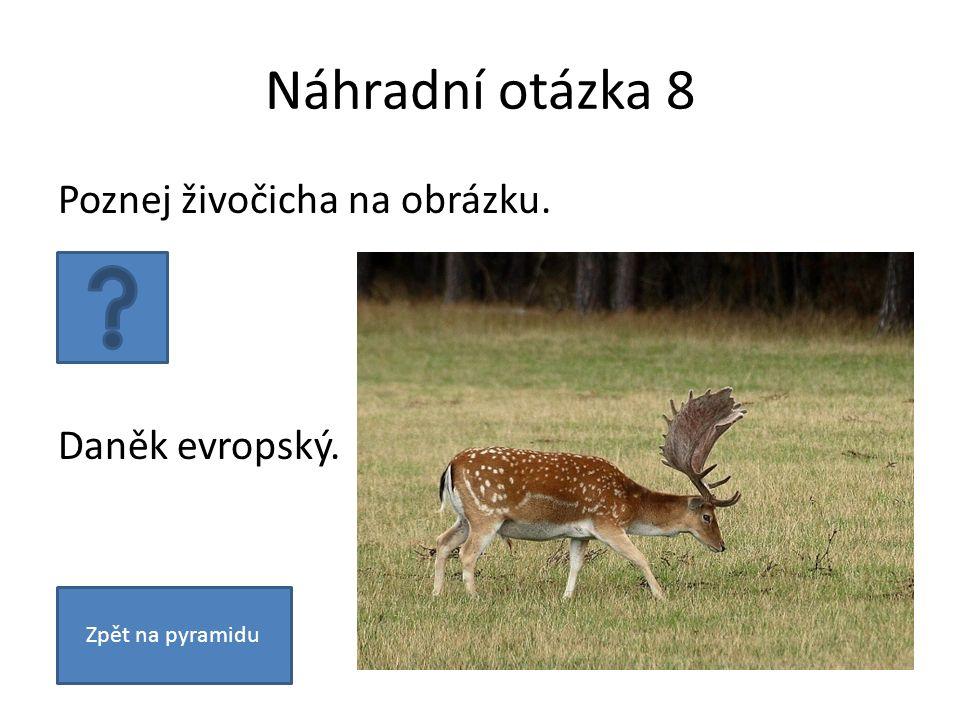 Náhradní otázka 8 Poznej živočicha na obrázku. Daněk evropský. Zpět na pyramidu