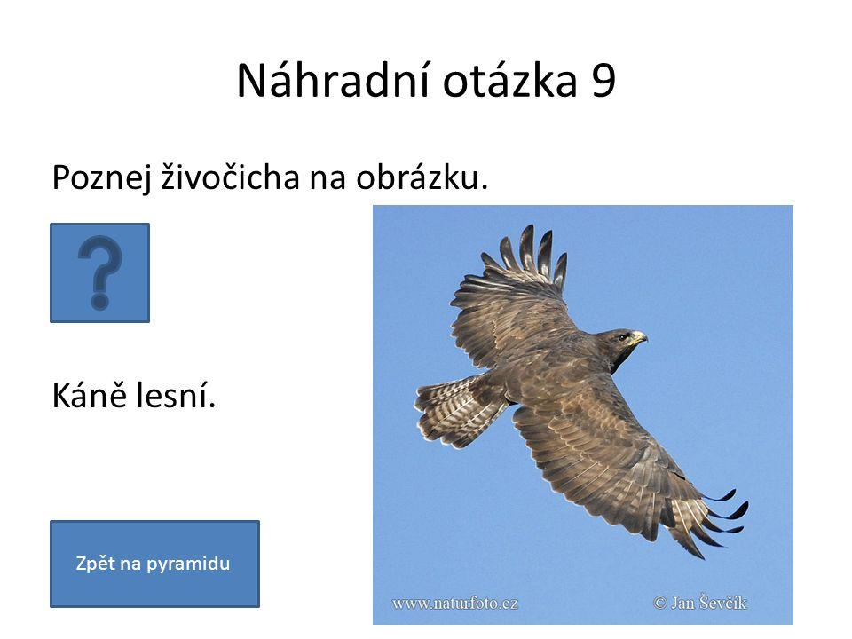 Náhradní otázka 9 Poznej živočicha na obrázku. Káně lesní. Zpět na pyramidu