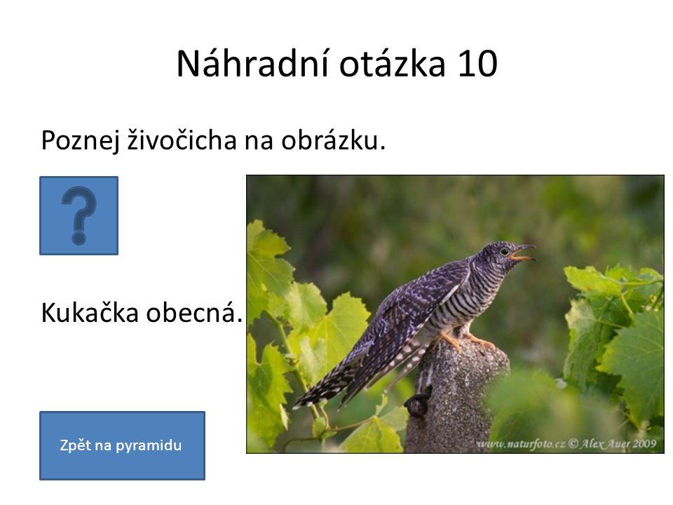 Náhradní otázka 10 Poznej živočicha na obrázku. Kukačka obecná. Zpět na pyramidu