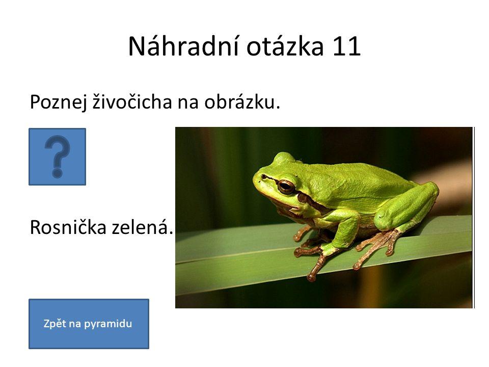 Náhradní otázka 11 Poznej živočicha na obrázku. Rosnička zelená. Zpět na pyramidu
