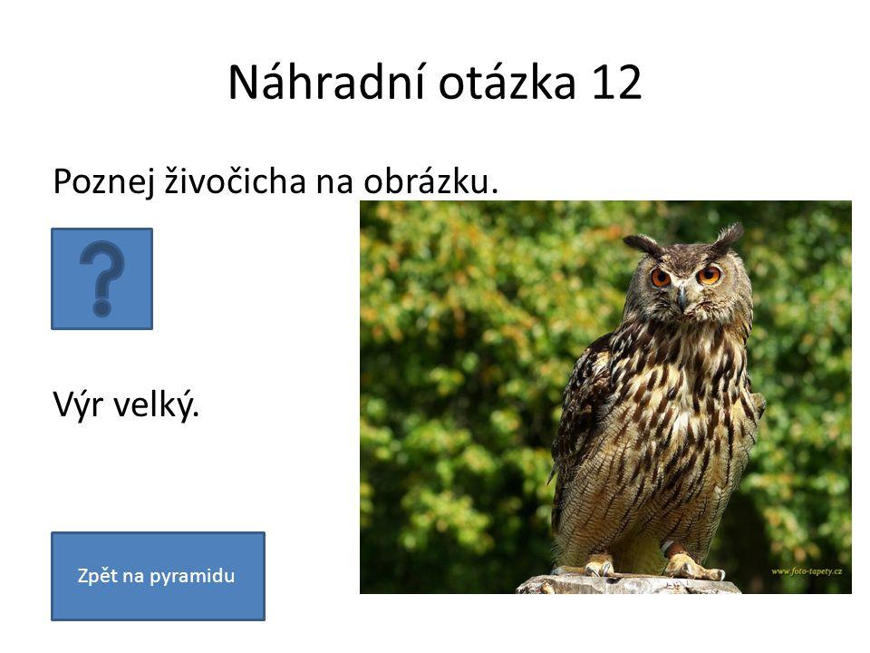 Náhradní otázka 12 Poznej živočicha na obrázku. Výr velký. Zpět na pyramidu