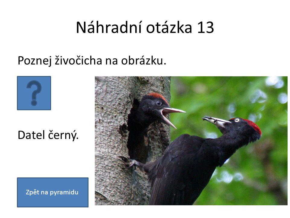 Náhradní otázka 13 Poznej živočicha na obrázku. Datel černý. Zpět na pyramidu