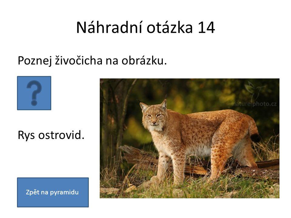 Náhradní otázka 14 Poznej živočicha na obrázku. Rys ostrovid. Zpět na pyramidu