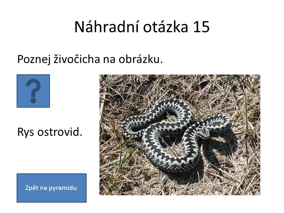 Náhradní otázka 15 Poznej živočicha na obrázku. Rys ostrovid. Zpět na pyramidu