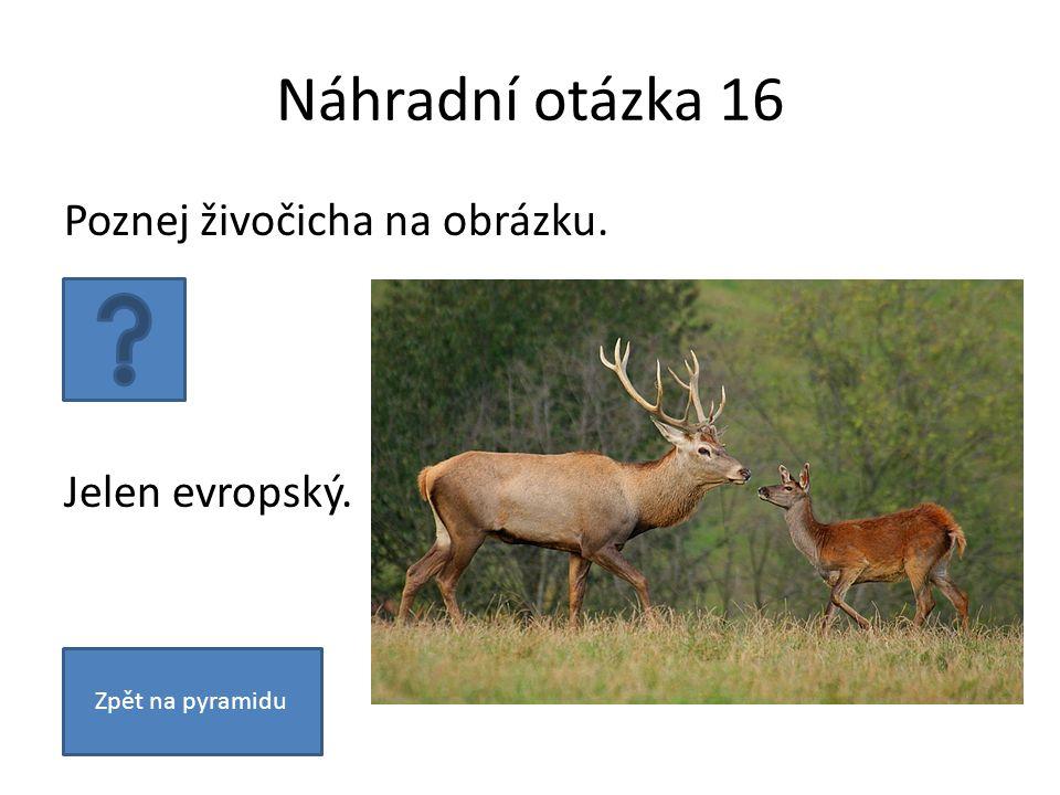 Náhradní otázka 16 Poznej živočicha na obrázku. Jelen evropský. Zpět na pyramidu