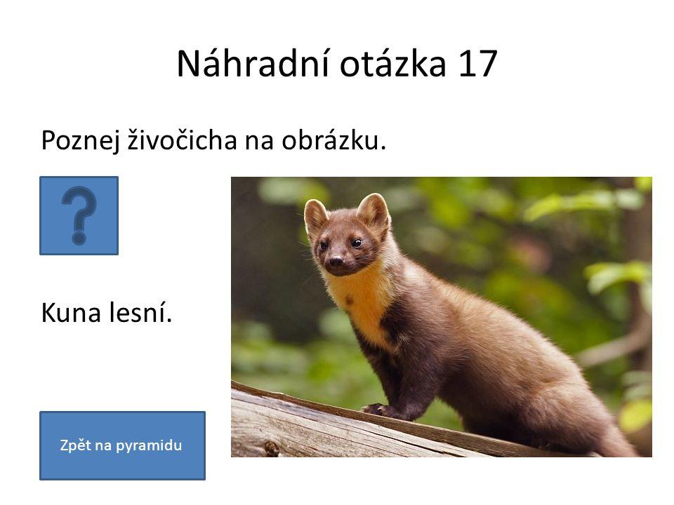 Náhradní otázka 17 Poznej živočicha na obrázku. Kuna lesní. Zpět na pyramidu