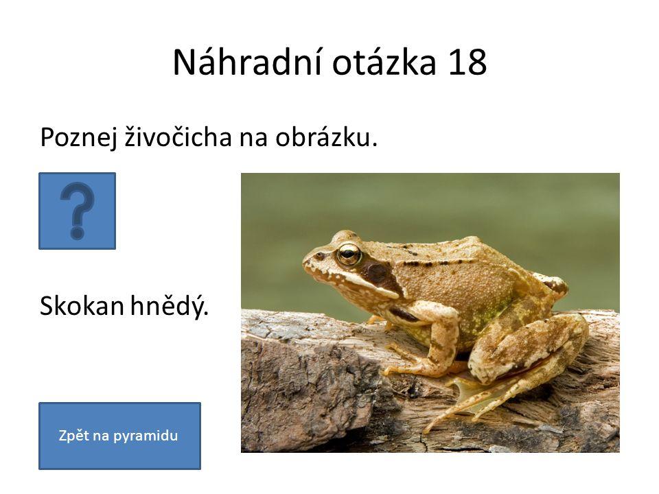 Náhradní otázka 18 Poznej živočicha na obrázku. Skokan hnědý. Zpět na pyramidu