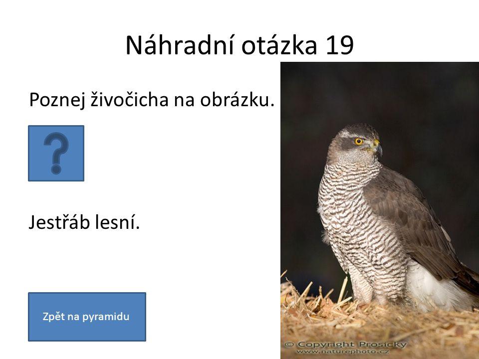 Náhradní otázka 19 Poznej živočicha na obrázku. Jestřáb lesní. Zpět na pyramidu