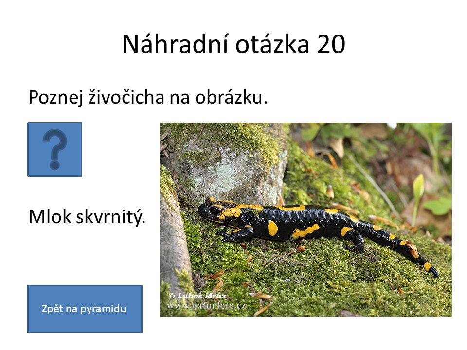 Náhradní otázka 20 Poznej živočicha na obrázku. Mlok skvrnitý. Zpět na pyramidu