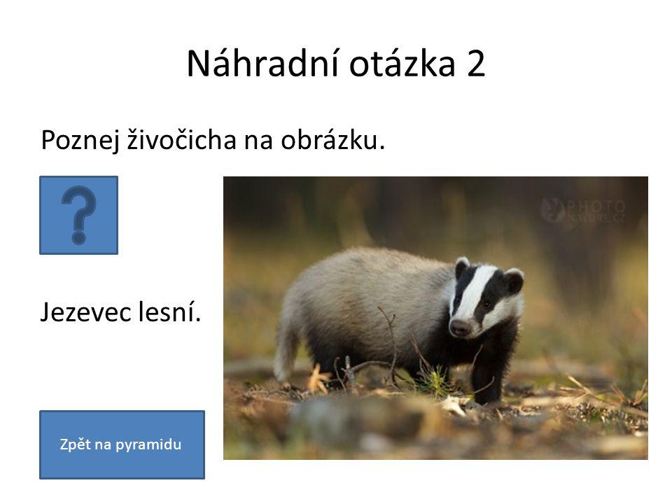 Náhradní otázka 2 Poznej živočicha na obrázku. Jezevec lesní. Zpět na pyramidu