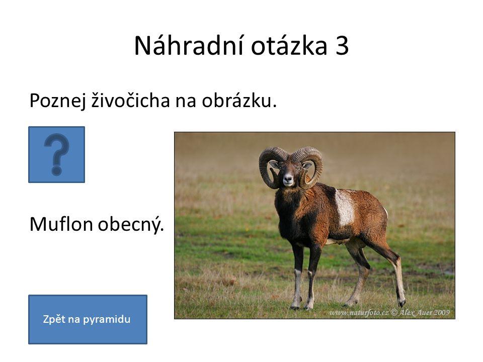 Náhradní otázka 3 Poznej živočicha na obrázku. Muflon obecný. Zpět na pyramidu