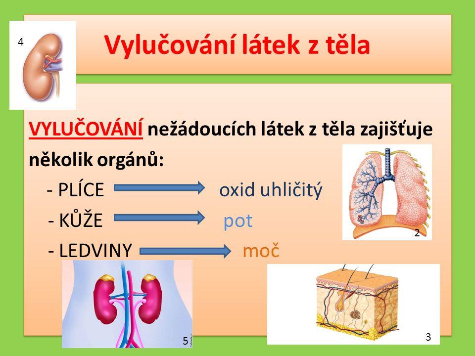 Vylučování látek z těla VYLUČOVÁNÍ nežádoucích látek z těla zajišťuje několik orgánů: - PLÍCE oxid uhličitý - KŮŽE pot - LEDVINY moč VYLUČOVÁNÍ nežádoucích látek z těla zajišťuje několik orgánů: - PLÍCE oxid uhličitý - KŮŽE pot - LEDVINY moč 2 3 4 5