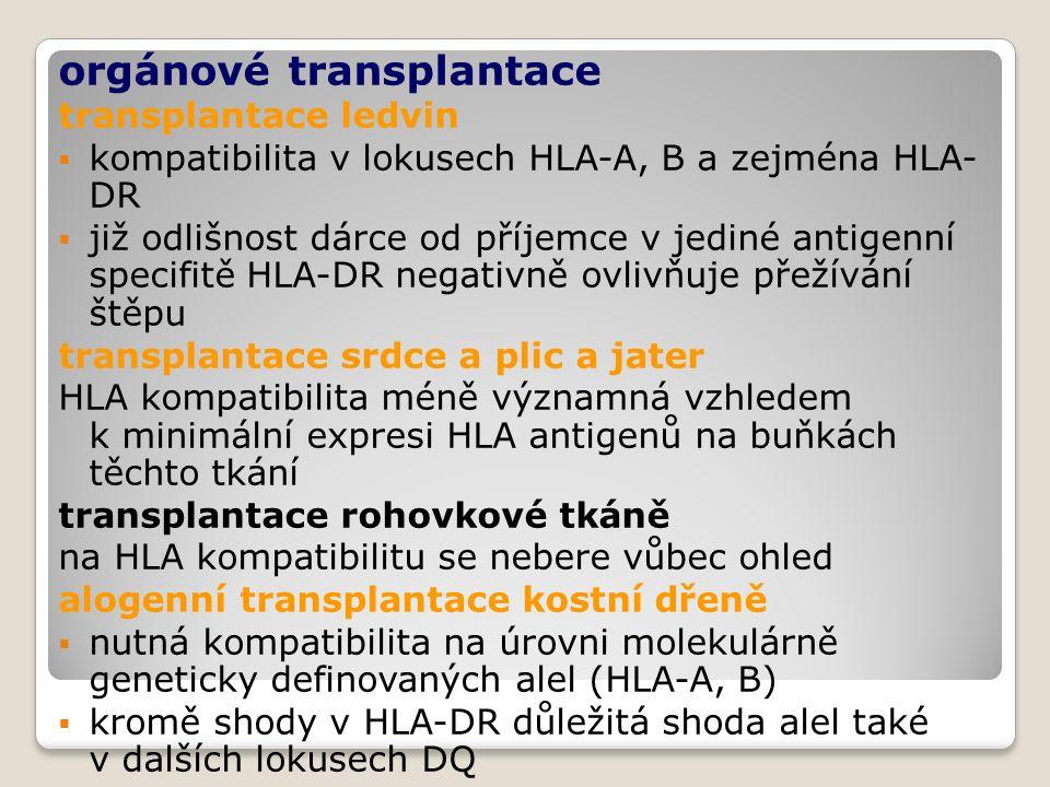 orgánové transplantace transplantace ledvin  kompatibilita v lokusech HLA-A, B a zejména HLA- DR  již odlišnost dárce od příjemce v jediné antigenní specifitě HLA-DR negativně ovlivňuje přežívání štěpu transplantace srdce a plic a jater HLA kompatibilita méně významná vzhledem k minimální expresi HLA antigenů na buňkách těchto tkání transplantace rohovkové tkáně na HLA kompatibilitu se nebere vůbec ohled alogenní transplantace kostní dřeně  nutná kompatibilita na úrovni molekulárně geneticky definovaných alel (HLA-A, B)  kromě shody v HLA-DR důležitá shoda alel také v dalších lokusech DQ