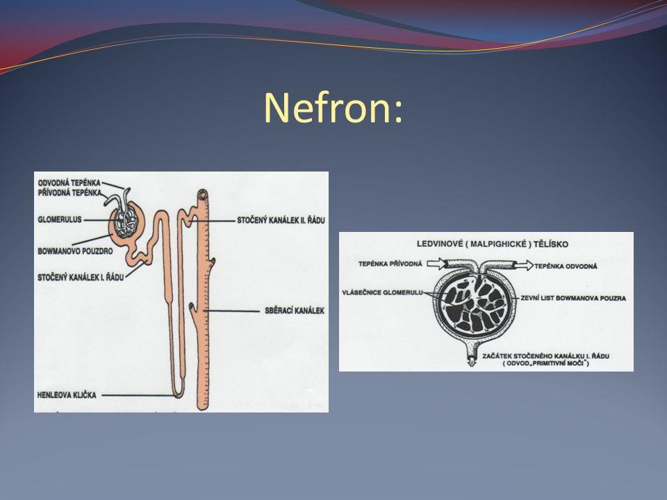 Nefron: