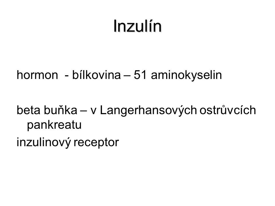 Inzulín hormon - bílkovina – 51 aminokyselin beta buňka – v Langerhansových ostrůvcích pankreatu inzulinový receptor