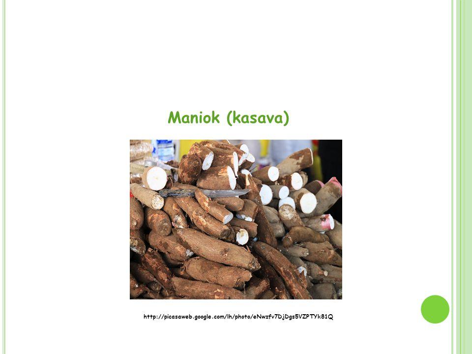 Maniok (kasava) http://picasaweb.google.com/lh/photo/eNwzfv7DjDgs5VZPTYk81Q