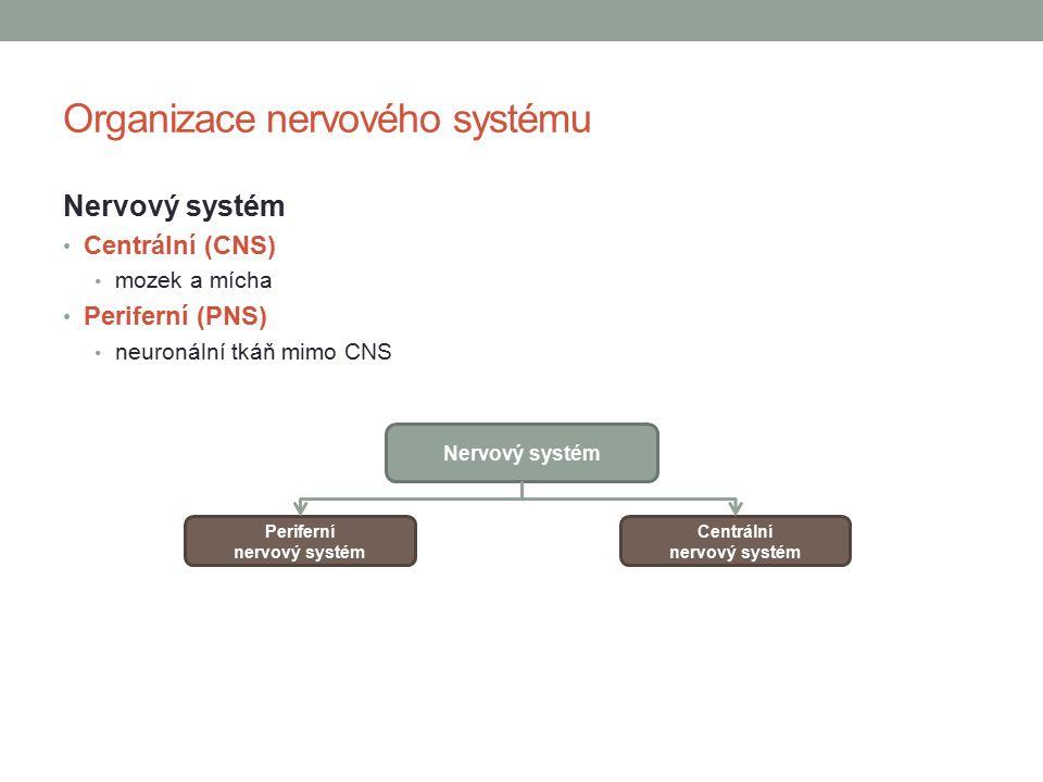 Organizace nervového systému Nervový systém Centrální (CNS) mozek a mícha Periferní (PNS) neuronální tkáň mimo CNS Nervový systém Periferní nervový systém Centrální nervový systém