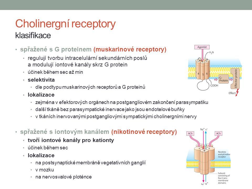 spřažené s G proteinem (muskarinové receptory) regulují tvorbu intracelulární sekundárních poslů a modulují iontové kanály skrz G protein účinek během sec až min selektivita dle podtypu muskarinových receptorů a G proteinů lokalizace zejména v efektorových orgánech na postgangliovém zakončení parasympatiku další tkáně bez parasympatické inervace jako jsou endotelové buňky v tkáních inervovanými postgangliovými sympatickými cholinergními nervy spřažené s iontovým kanálem (nikotinové receptory) tvoří iontové kanály pro kationty účinek během sec lokalizace na postsynaptické membráně vegetativních ganglií v mozku na nervosvalové ploténce Cholinergní receptory klasifikace
