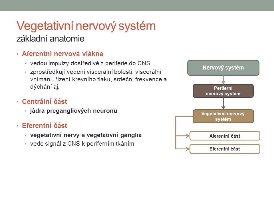 Aferentní nervová vlákna vedou impulzy dostředivě z periférie do CNS zprostředkují vedení viscerální bolesti, viscerální vnímání, řízení krevního tlaku, srdeční frekvence a dýchání aj.