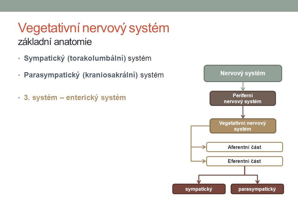 Vegetativní nervový systém základní anatomie Sympatický (torakolumbální) systém Parasympatický (kraniosakrální) systém 3.
