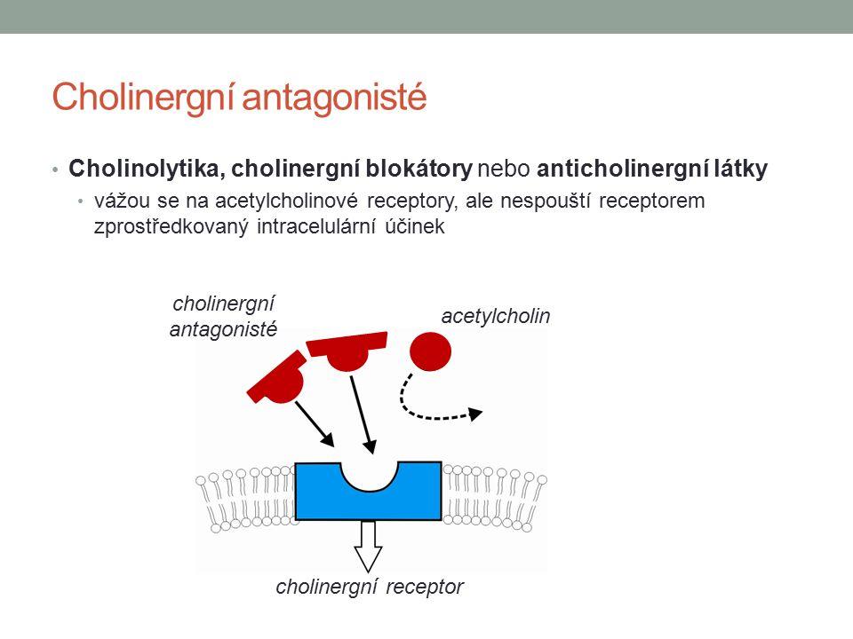 Cholinergní antagonisté Cholinolytika, cholinergní blokátory nebo anticholinergní látky vážou se na acetylcholinové receptory, ale nespouští receptorem zprostředkovaný intracelulární účinek acetylcholin cholinergní receptor cholinergní antagonisté