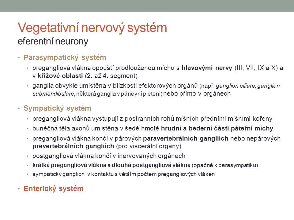 Vegetativní nervový systém eferentní neurony Parasympatický systém pregangliová vlákna opouští prodlouženou míchu s hlavovými nervy (III, VII, IX a X) a v křížové oblasti (2.