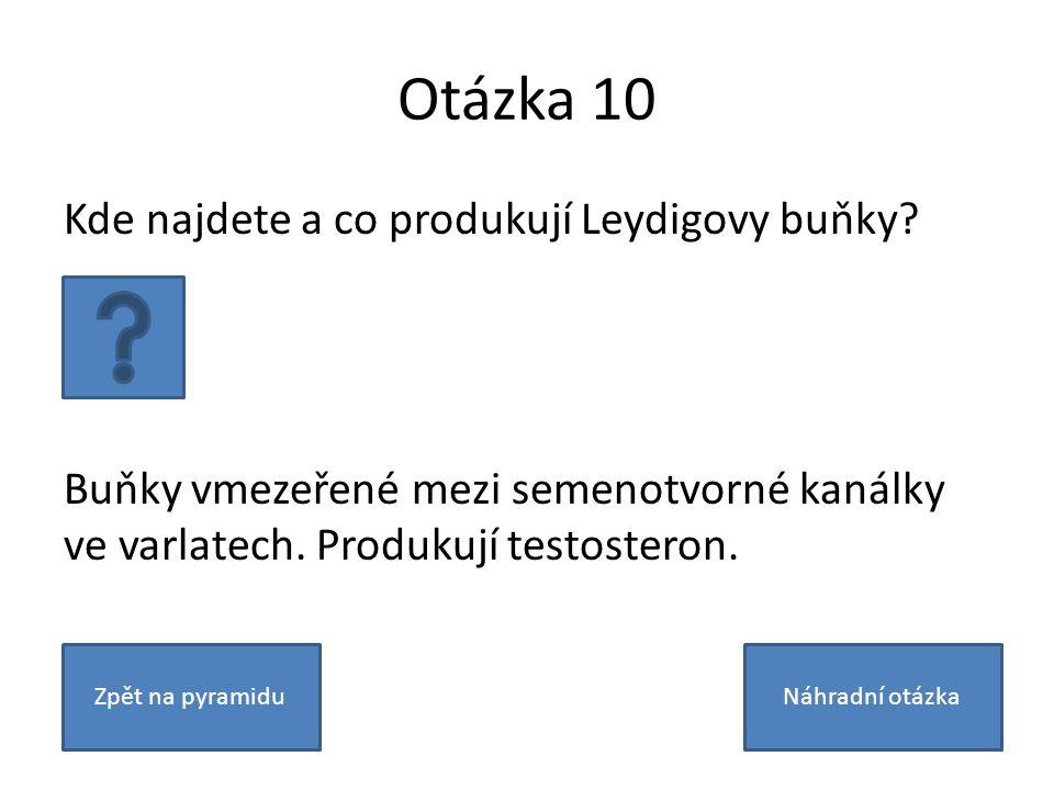 Otázka 10 Kde najdete a co produkují Leydigovy buňky.