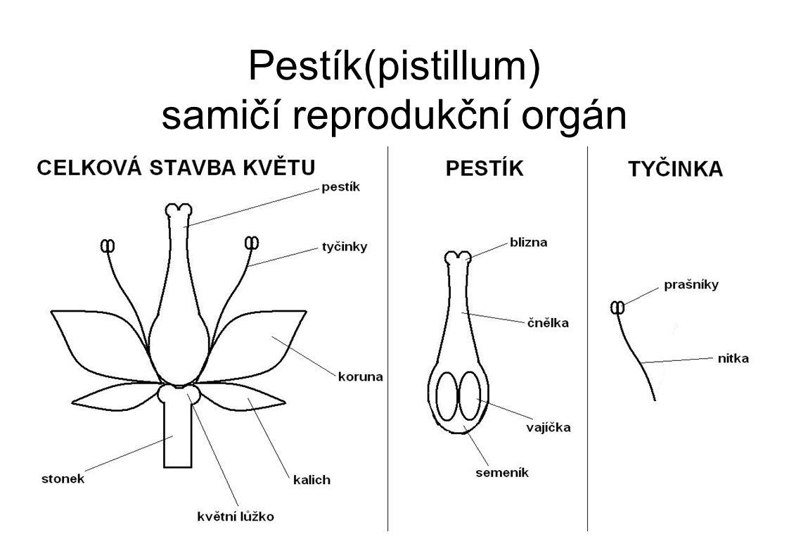 Pestík(pistillum) samičí reprodukční orgán
