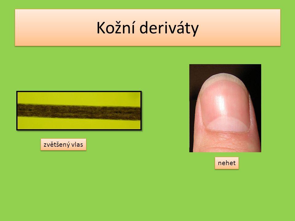 Kožní deriváty zvětšený vlas nehet
