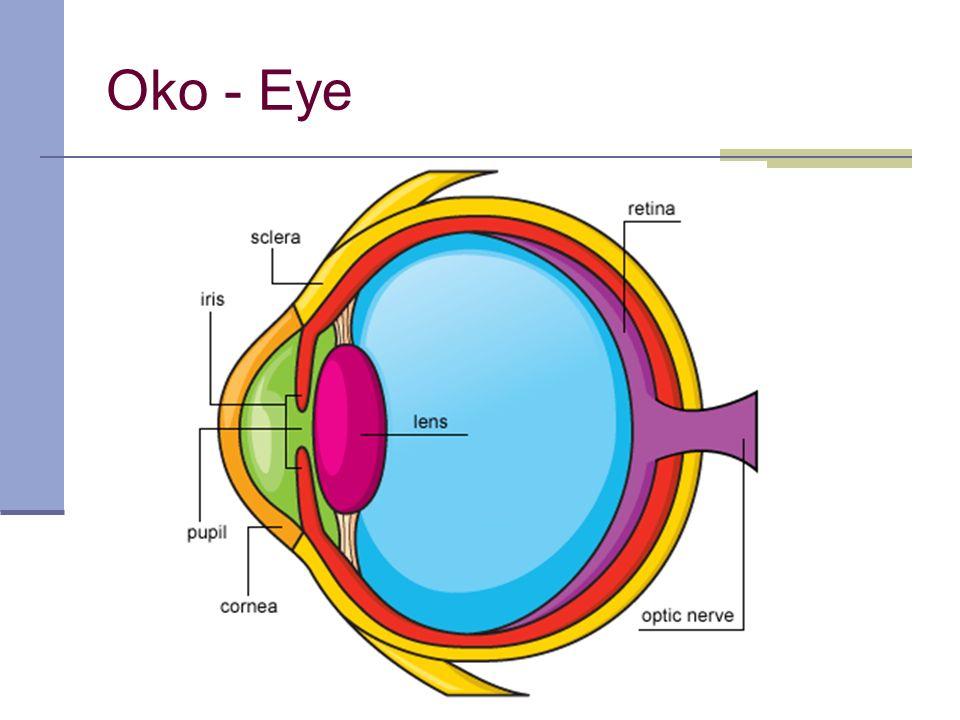 acahova@spst.cz Ex. 3a – Image or Scheme sítnice oční nerv čočka duhovka zornice rohovka bělima
