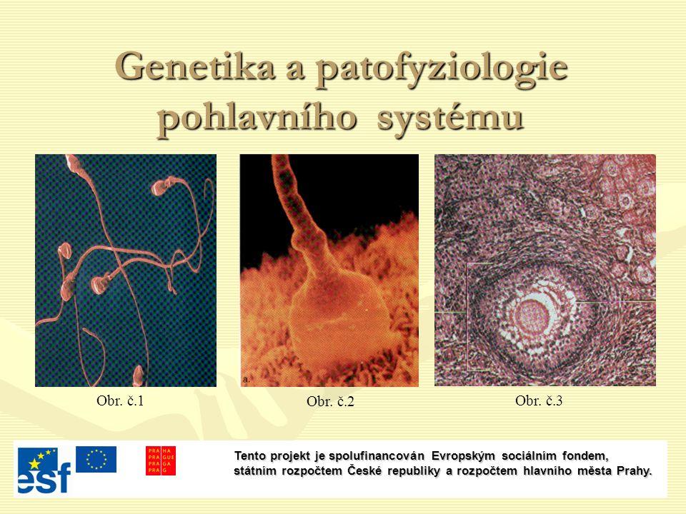 Genetika a patofyziologie pohlavního systému Obr. č.2 Obr.