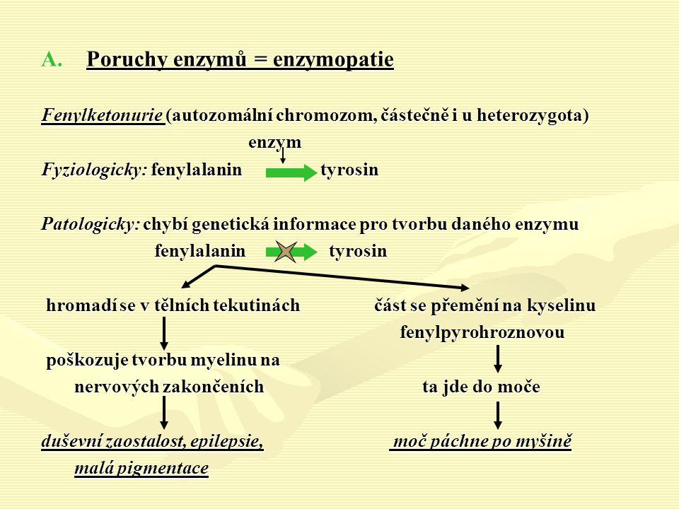 A.Poruchy enzymů = enzymopatie Fenylketonurie (autozomální chromozom, částečně i u heterozygota) enzym enzym Fyziologicky: fenylalanin tyrosin Patologicky: chybí genetická informace pro tvorbu daného enzymu fenylalanin tyrosin fenylalanin tyrosin hromadí se v tělních tekutinách část se přemění na kyselinu hromadí se v tělních tekutinách část se přemění na kyselinu fenylpyrohroznovou fenylpyrohroznovou poškozuje tvorbu myelinu na poškozuje tvorbu myelinu na nervových zakončeních ta jde do moče nervových zakončeních ta jde do moče duševní zaostalost, epilepsie, moč páchne po myšině malá pigmentace malá pigmentace