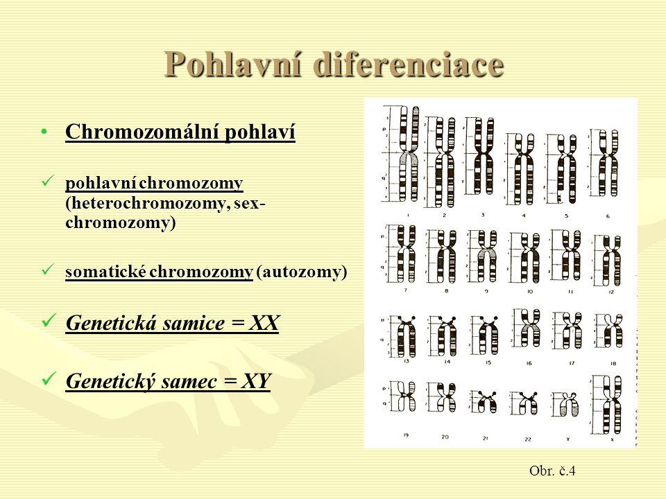 Pohlavní diferenciace Chromozomální pohlavíChromozomální pohlaví pohlavní chromozomy (heterochromozomy, sex- chromozomy) pohlavní chromozomy (heterochromozomy, sex- chromozomy) somatické chromozomy (autozomy) somatické chromozomy (autozomy) Genetická samice = XX Genetický samec = XY Obr.