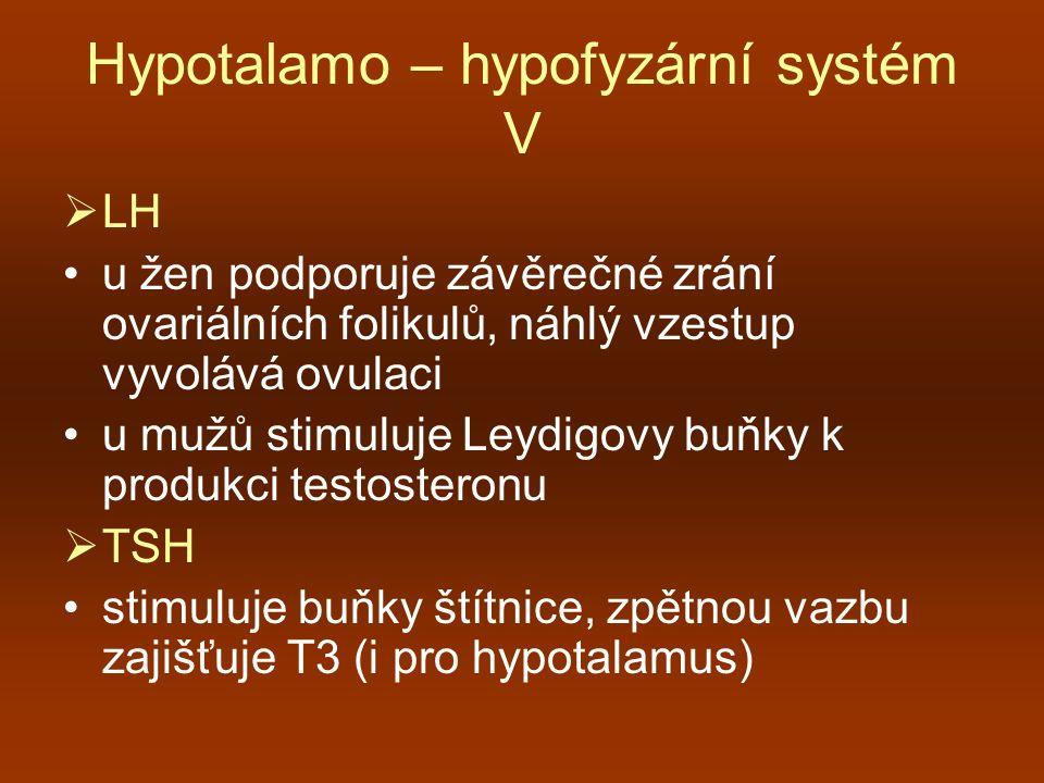 Hypotalamo – hypofyzární systém V  LH u žen podporuje závěrečné zrání ovariálních folikulů, náhlý vzestup vyvolává ovulaci u mužů stimuluje Leydigovy