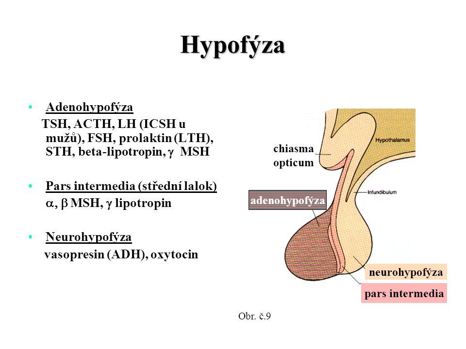 Hypofýza Adenohypofýza TSH, ACTH, LH (ICSH u mužů), FSH, prolaktin (LTH), STH, beta-lipotropin,  MSH Pars intermedia (střední lalok)  MSH,  lipotropin Neurohypofýza vasopresin (ADH), oxytocin neurohypofýza pars intermedia chiasma opticum adenohypofýza Obr.