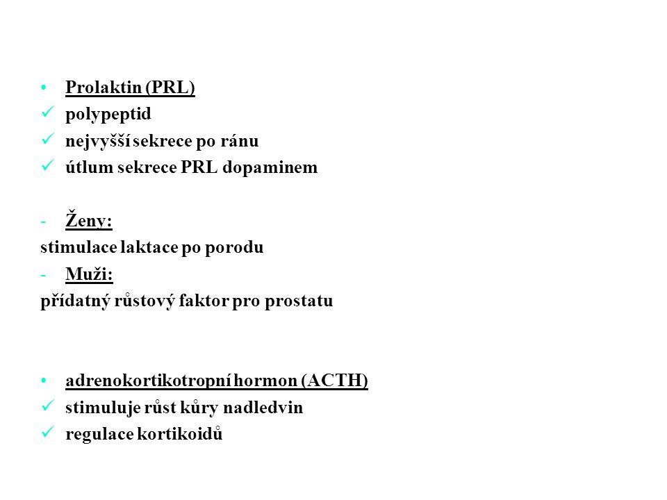 Prolaktin (PRL) polypeptid nejvyšší sekrece po ránu útlum sekrece PRL dopaminem -Ženy: stimulace laktace po porodu -Muži: přídatný růstový faktor pro prostatu adrenokortikotropní hormon (ACTH) stimuluje růst kůry nadledvin regulace kortikoidů