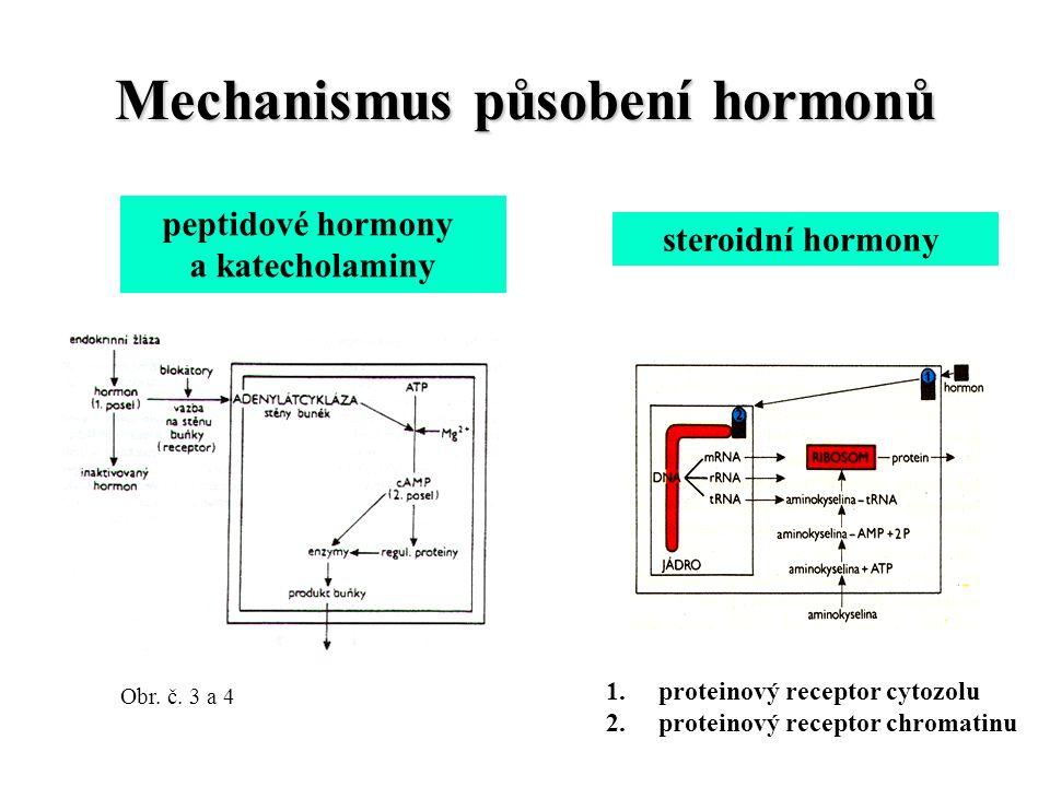 Mechanismus působení hormonů peptidové hormony a katecholaminy steroidní hormony 1.proteinový receptor cytozolu 2.proteinový receptor chromatinu Obr.